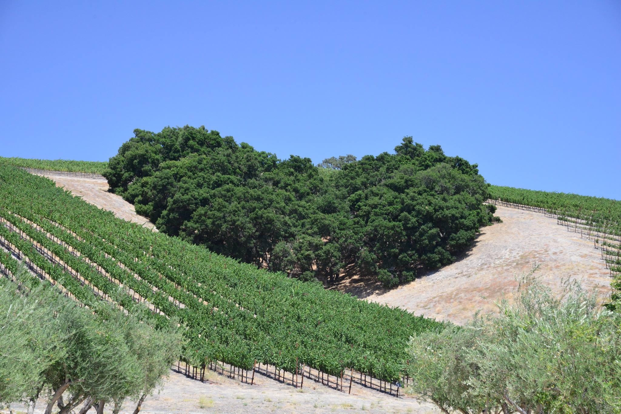 ◆募集中◆ 南カリフォルニアワインを楽しむ会 2020年スケジュール