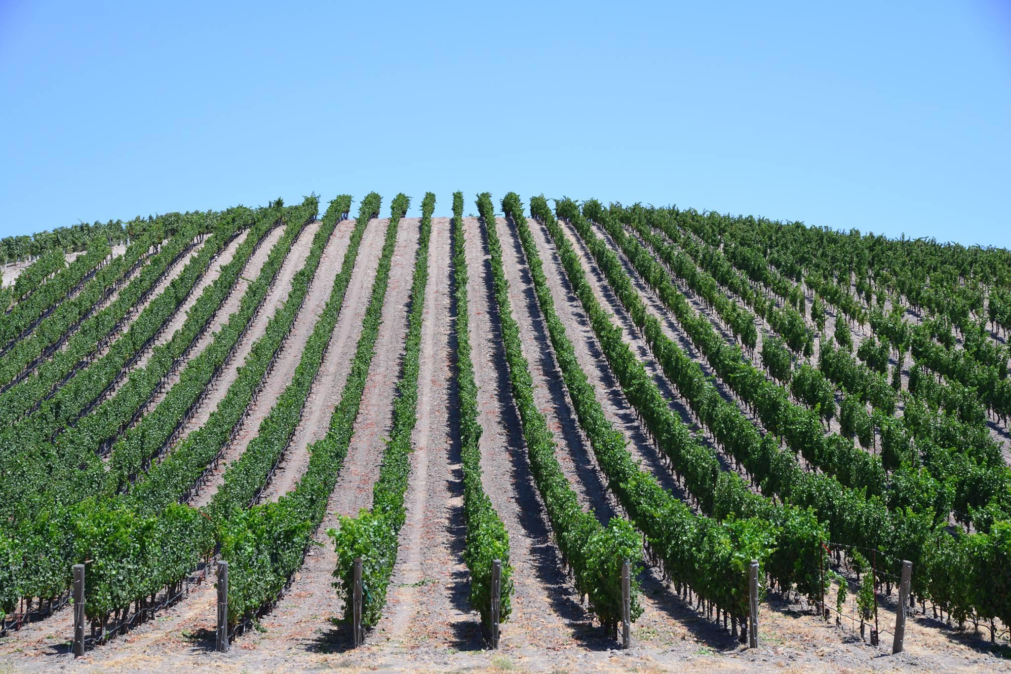 ◆募集中◆ CSW (米国ワイン資格) 受験手続き支援サービス