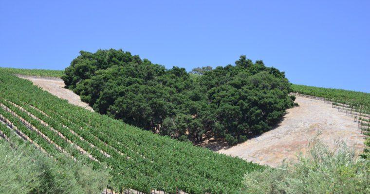 ◆募集中◆ 南カリフォルニアワインを楽しむ会 2019年前半特別企画【4大銘醸地を味わう】