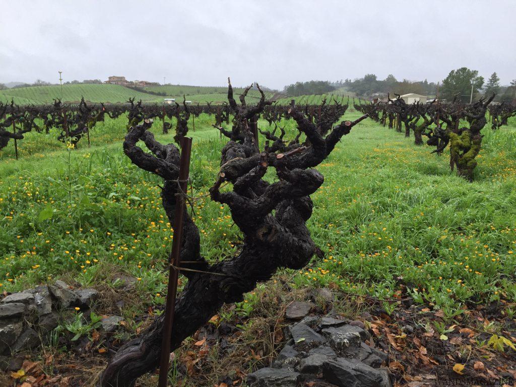 ◆終了◆ 2019.3.2 カリフォルニアワイン【ジンファンデル】5本飲み比べ 第2回