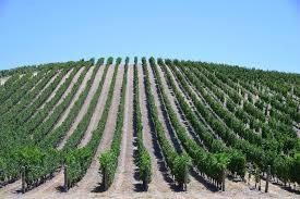 ◆募集中◆ 2021.4.24   南カリフォルニアワインを楽しむ会 第18回 【パソロブレス】