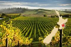 ニュージーランドワインと料理を満喫。