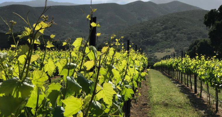 ◆残り1名様◆ 2019.06.22   南カリフォルニアワインを楽しむ会 第10回 【モントレーとテメキュラ】