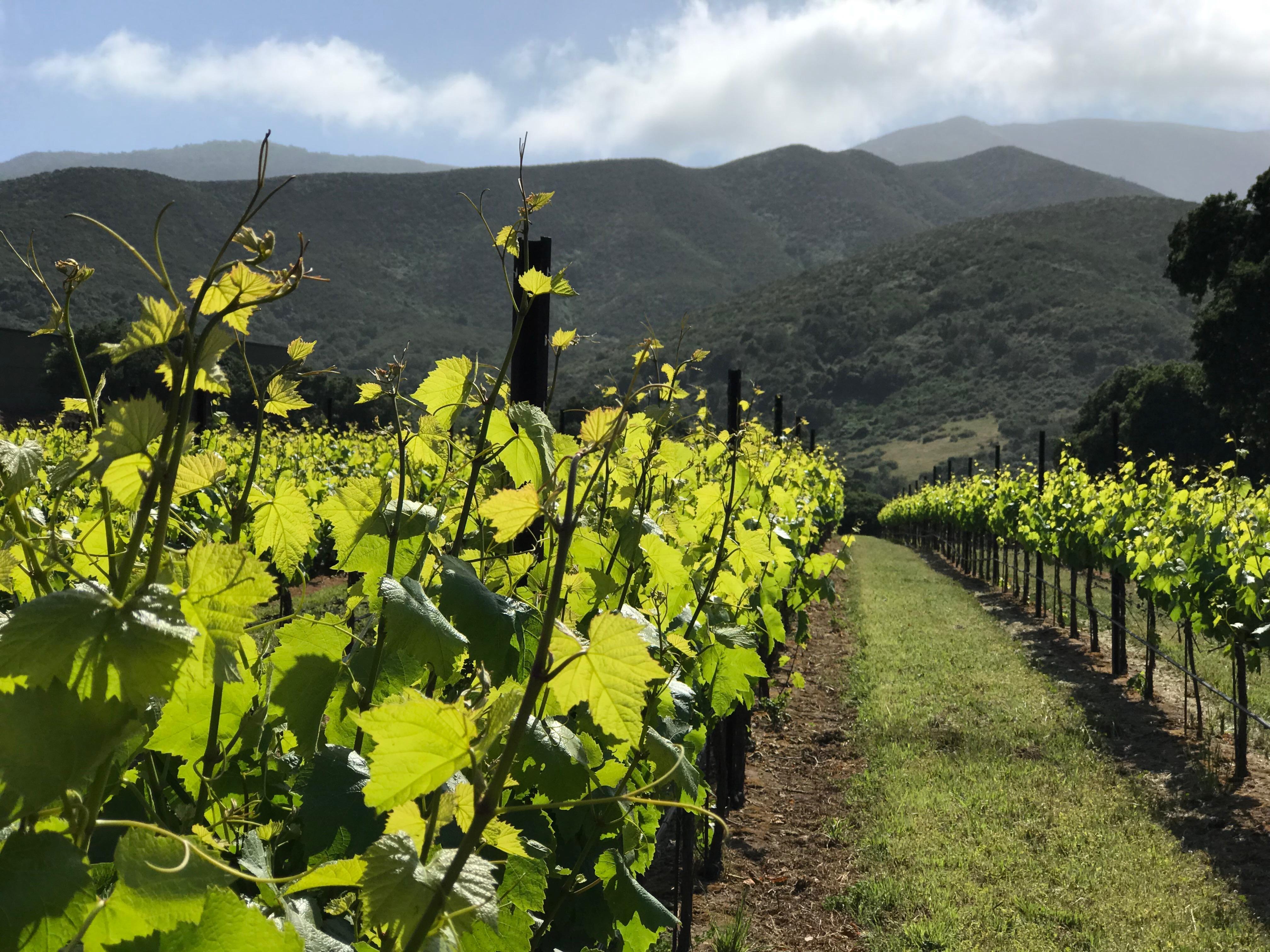 ◆終了◆ 2019.06.22   南カリフォルニアワインを楽しむ会 第10回 【モントレーとテメキュラ】