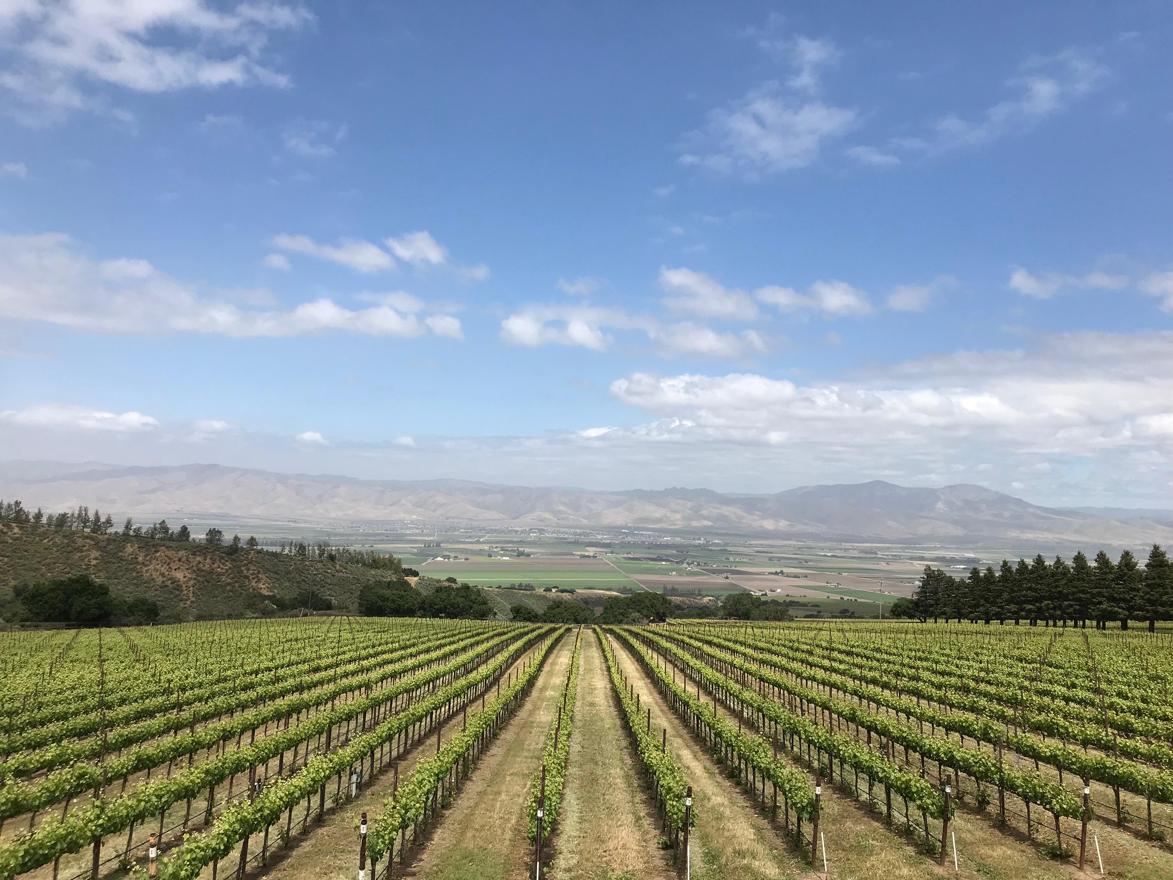 ◆終了◆ 2020.10.10   南カリフォルニアワインを楽しむ会 第14回 【サンタバーバラ】