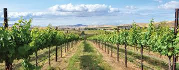 ◆終了◆ 2019.09.21 カリフォルニア・リヴァモアのワインを楽しむ会